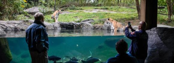 Découvrez le Zoo du bronx à New York